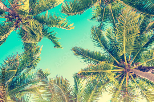 Blue sky and palm trees view from below, vintage style, tropical beach and summer background, travel concept