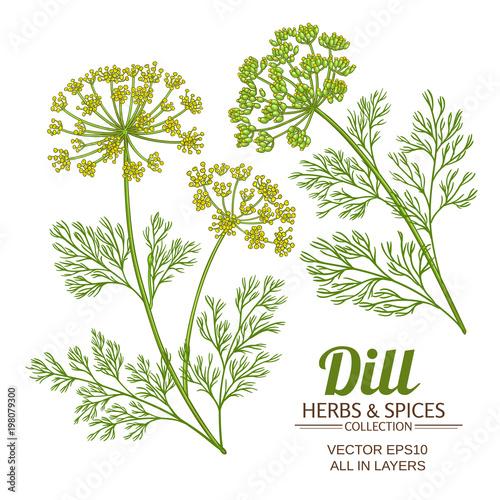 Canvas Print dill plant vector set
