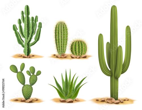 Fotografie, Obraz Cactus plants set of desert among sand and rocks
