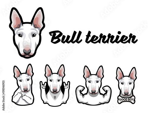 Bull terrier with gestures Fototapet