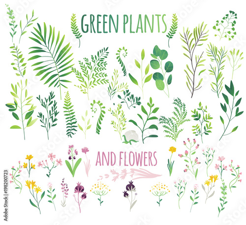 green leaves, twigs and flowers, flat doodle vector illustration isolated on white background Fototapeta