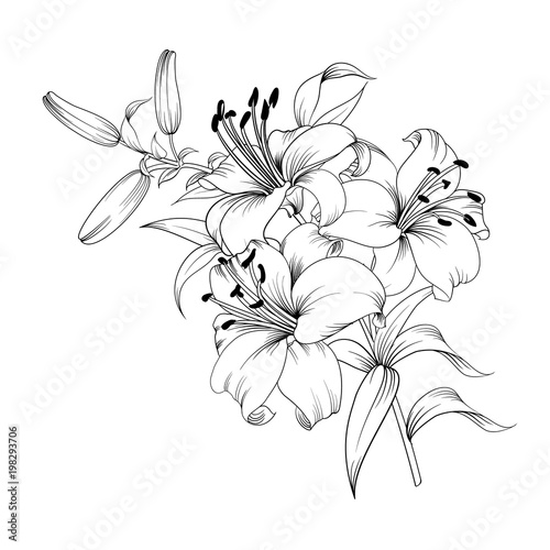 Carta da parati Contour of blooming lily isolated over white background