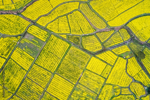 aerial view of rapeseed flower blooming in farmland Fototapeta