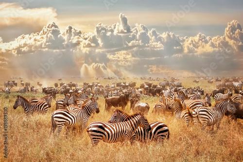 Dzikie afrykańskie zebry i gnu w afrykańskiej sawannie na tle chmur burzowych cumulus i zachodzącego słońca. Dzika przyroda Tanzanii. Artystyczny naturalny obraz.