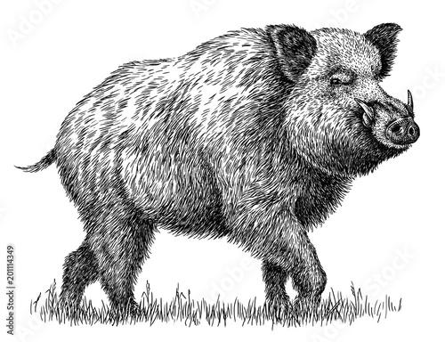 Obraz na płótnie black and white engrave isolated pig illustration