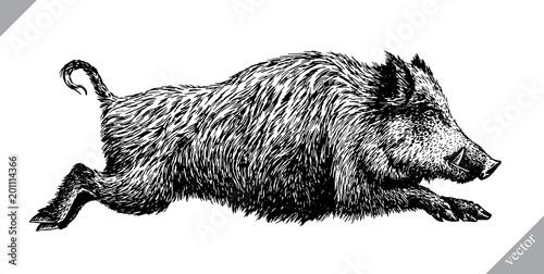 Fotografia, Obraz black and white engrave isolated pig vector illustration
