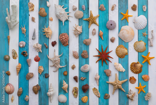 collection of sea shells on a white blue wooden background