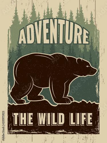 Retro plakat z obrazem dzikiego niedźwiedzia