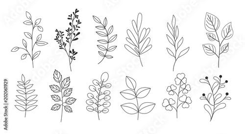 Wektor zestaw ilustracji gałęzi, liści, gałązek, traw ogrodowych w stylu linii dla kwiatowe wzory, bukiety i kompozycje w białym tle. Elementy do kart okolicznościowych.