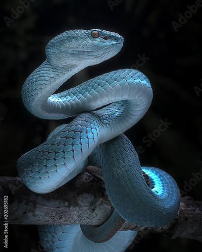 Photo Snake - Viper - Reptile Series