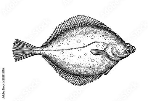 Fotografiet Ink sketch of flounder.