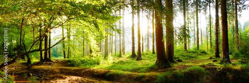 Fototapeta premium Piękny las wiosną z jasnym słońcem świecącym przez drzewa