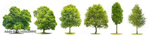 Collection trees maple oak birch chestnut Isolated nature objects