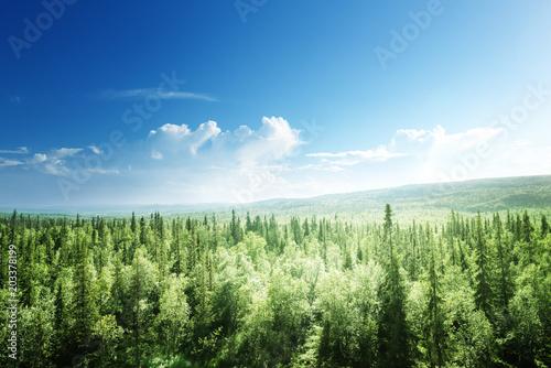 Obraz premium las w słoneczny dzień