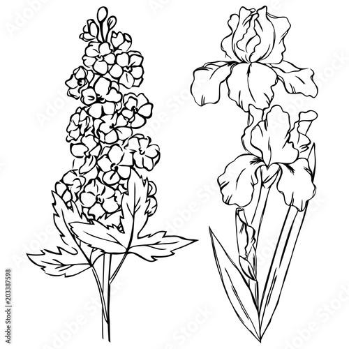 Fényképezés vector contour iris delphinium flowers coloring book pattern