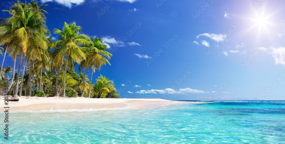 Palm Beach In Tropical Paradise - Guadalupe Island -  Caribbean  - obrazy, fototapety, plakaty