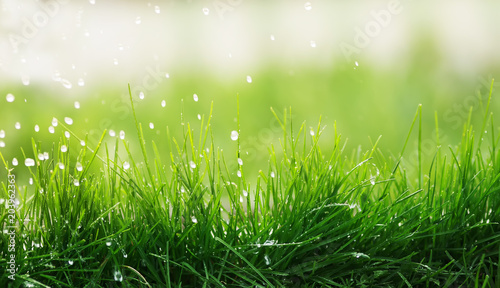 Fototapeta premium naturalne tło soczysta zielona trawa i kapiący deszcz na dzień wiosny