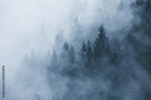 Fantazja lasu mgłowy krajobraz w ranek mgle. Zdjęcie zostało zrobione w Słowenii, UE.