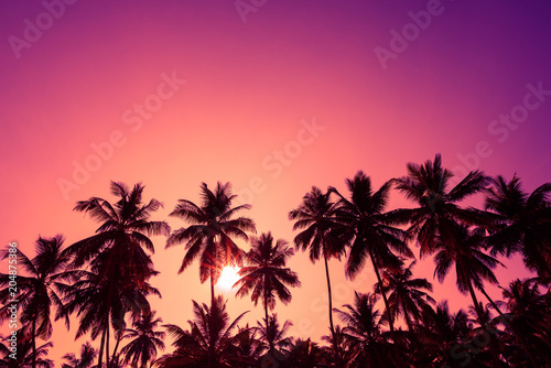 Tropical sunset coconut palm trees silhouettes