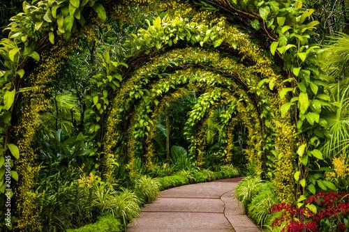 Fotografia, Obraz orchid arch in Singapore botanical gardens