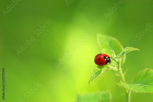 Ladybug on green fresh leaf