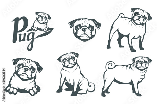 Photo Pug dog set