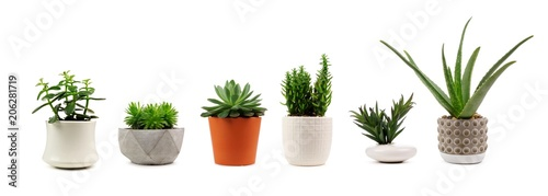 Photo Group of various indoor cacti and succulent plants in pots isolated on a white b
