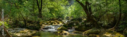 panorama sur une rivière et son environement luxuriant