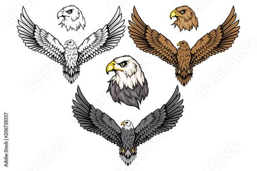 Foto American eagle set