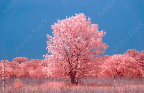 Photo Prairie and Single Large Tree in Color Infrared