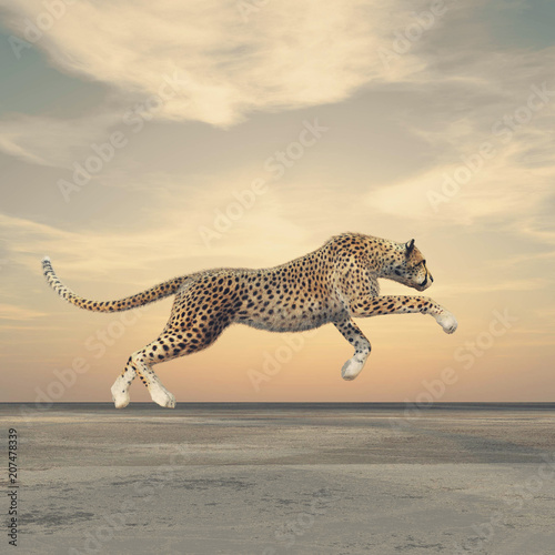 Leinwand Poster The beauty of a cheetah who running.