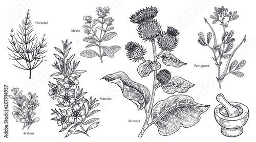 Fényképezés Set of imedical plants, flowers and herbs.