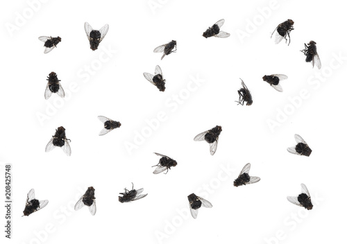 many dead flies isolated on white background