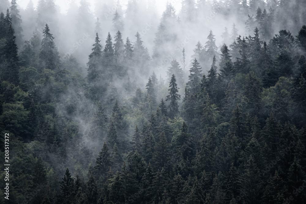 Fototapeta Mglisty las czarno-biały
