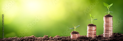 Fotografia Growing Money - Plant On Coins - Finance And Investment Concept