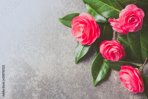 Fotografia Pink japonese camellia on gray background. Copy space. Flat lay.