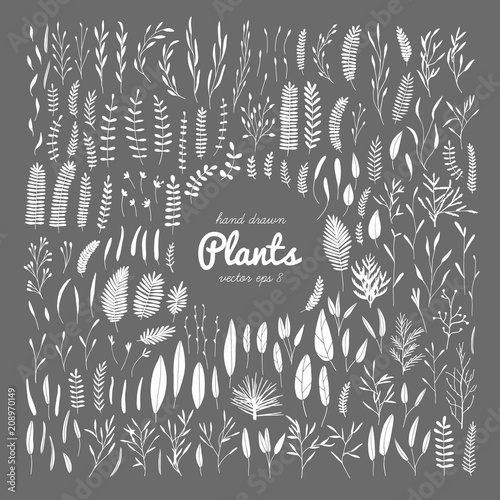 Canvas Print Plants, leaves.