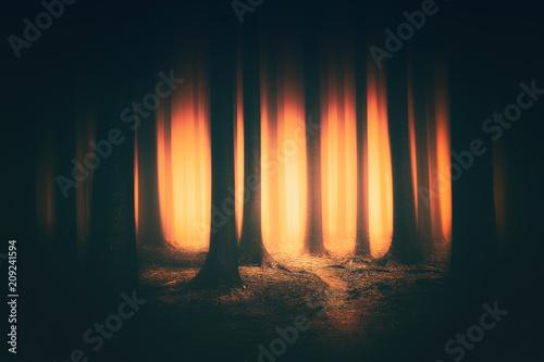 fantasy dark forest with sunlight Fototapeta