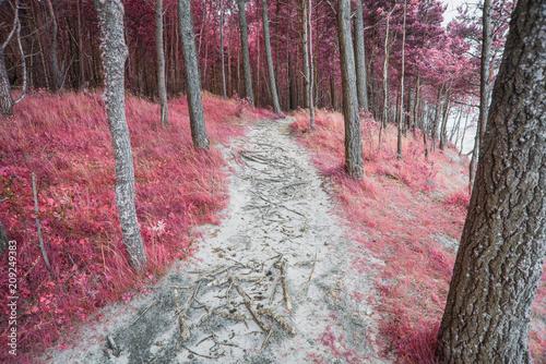 Wallpaper Mural infrared forest landscape