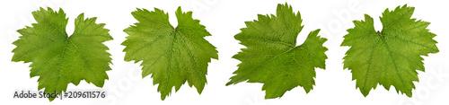 Fotografia grape leaf isolated on white background