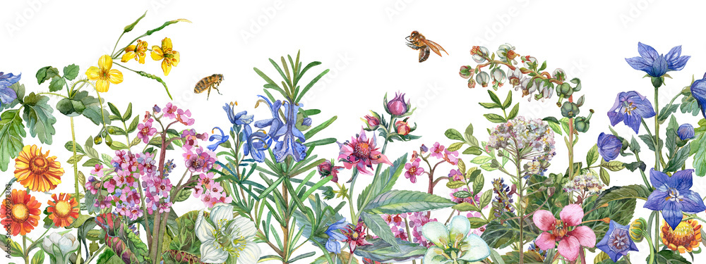 Seamless rim. Border with medicinal herbs, flowering wildflowers, leaves and bees. Botanical Illustration on white background. Watercolor drawing.