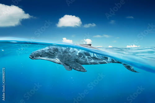 whale in ocean with half angle view .