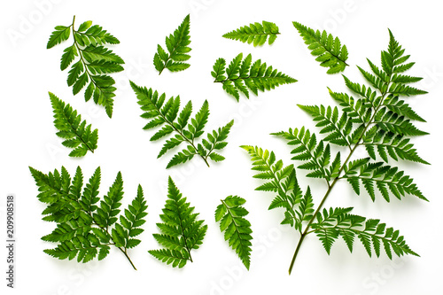 collection of green fern leaves isolated on white background