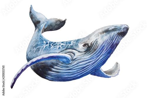 Fototapeta premium Akwarela płetwal błękitny. Ilustracja na białym tle. Do projektowania, nadruków lub tła