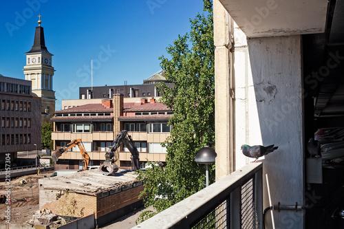 Pigeon As A Demolition Supervisor