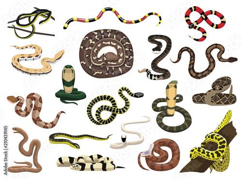 Fototapeta premium Various Snakes Poses Vector Illustration