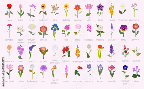 Photo Your garden guide. Top 50 most popular flowers infographic