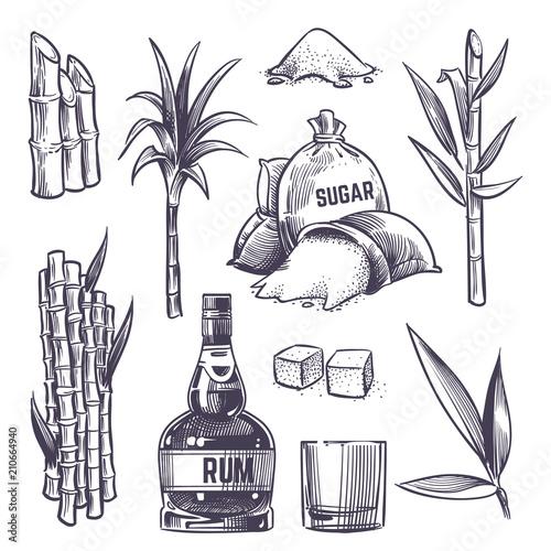 Fotografia Hand drawn cane leaves, sugar plant stalks, sugarcane farm harvest, glass and bottle of rum