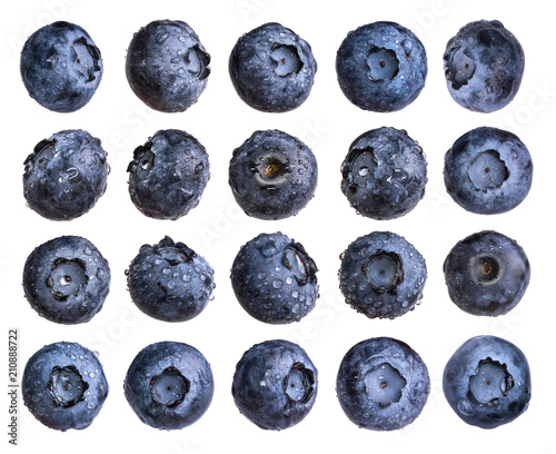 Big set of fresh blueberry with water drops isolated on white background.