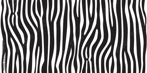 Fototapeta stripe animal jungle texture zebra vector black white print background seamless
